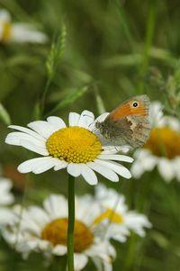 Kleines Wiesenvögelchen (Winfried Becker)