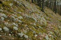 Waldhang mit Rentierflechte bei Adorf (Winfried Becker)