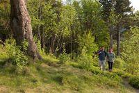 Idyllisch und Schön ist das Wandern in den Wäldern des Naturparks.