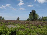 Heidelandschaft (Tourist-Information Willingen)