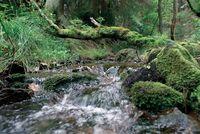 """Klarer Bergbach im Naturpark Diemelsee (Tourist-Information Willingen)"